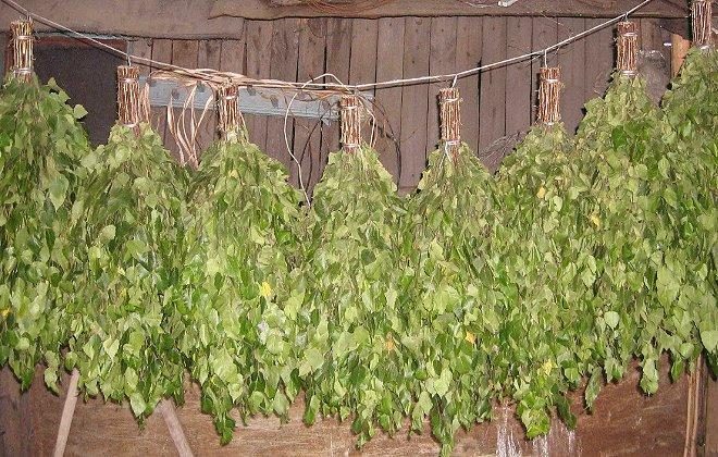 готовые веники из берёзы