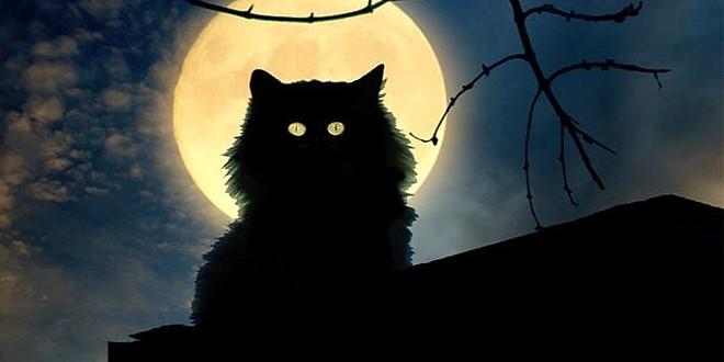 Кот ночью на бане